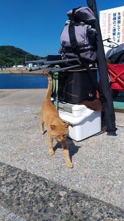 Ainoshima Island: P_20180916_142024_large.jpg