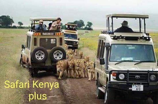 Safari Kenya Plus - Private Day Tour