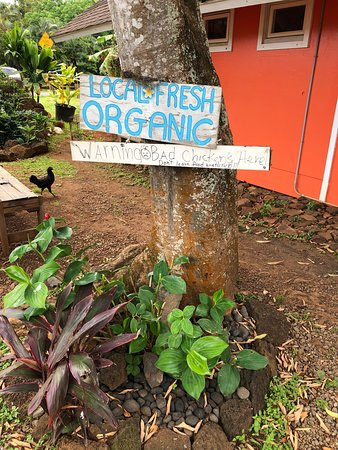 Anahola, HI: Mind the sign for bad chickens! They will eat your Acai bowl.