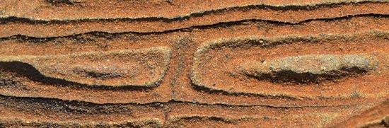Costiera di Calafuria: Le meraviglie della natura, sugli scogli di Calafuria