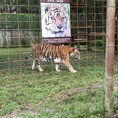 photo0 jpg - Picture of Big Cat Rescue, Tampa - TripAdvisor