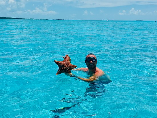 Starfish! Compass Cay - Picture of Fowl Cay Resort, Great