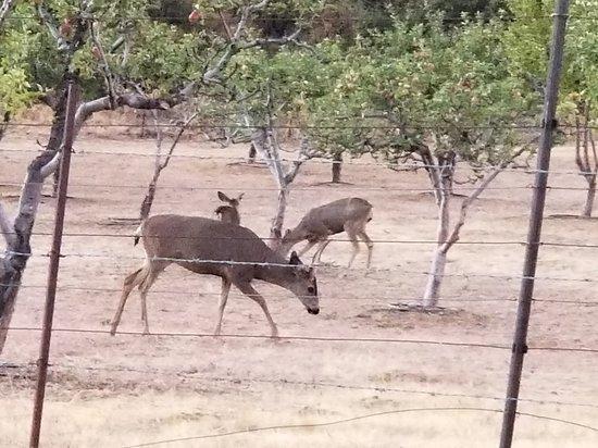 Oak Glen, CA: 20180915_190002_large.jpg