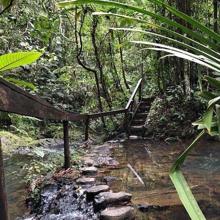 Colo-I-Suva Forest Park: photo0.jpg
