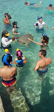 Great Exuma: Swimming with turtles at farmers cay
