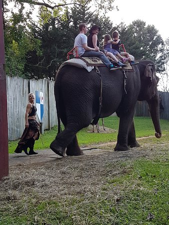 Crownsville, MD: Elephant Rides