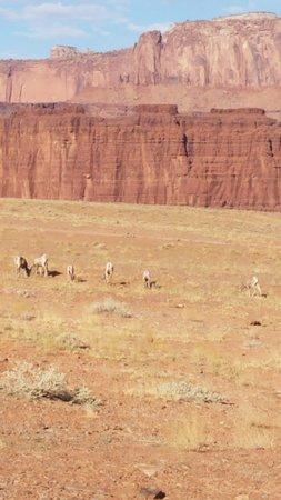 Deep Desert Expeditions照片