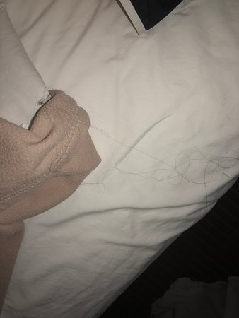 Extended Stay America - Hartford - Meriden: Hair on my daughters sheet under the covers on the bed when she went to climb into bed
