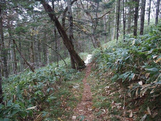 Biruwa Mashu Trail