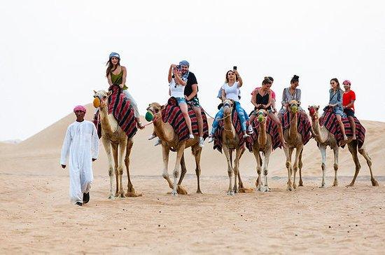 Safari im Geländewagen in der Wüste...