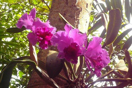 Phantasea Tropical Botanical Garden...