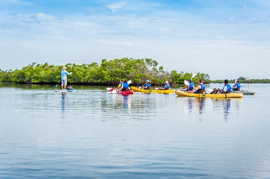 Rookery Bay Reserve Kayak Ecotour in...