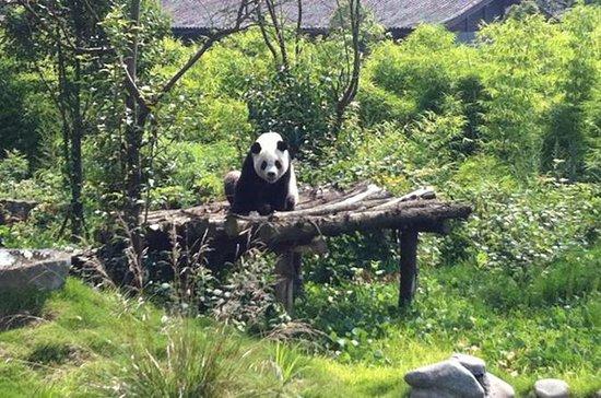 Excursão Privada de Dia: Dujiangyan...