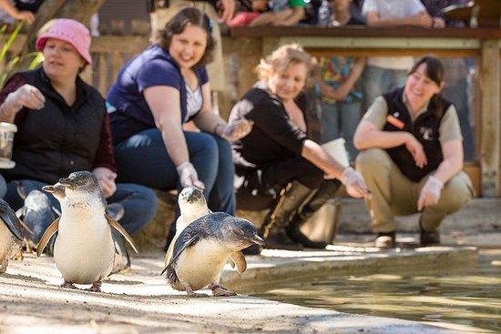 阿德莱德动物园背后的经历:企鹅人