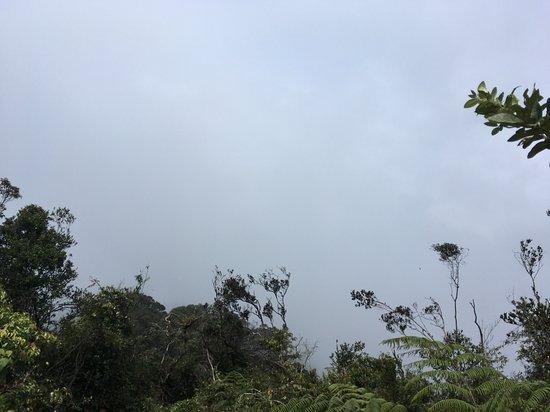 Gunung Bunga Buah