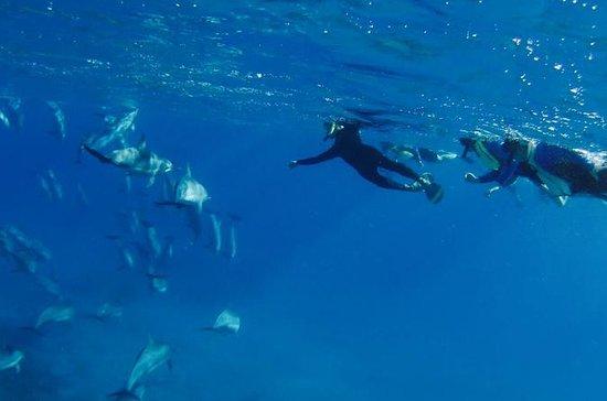 Kona Wild Dolphin and Reef Snorkel