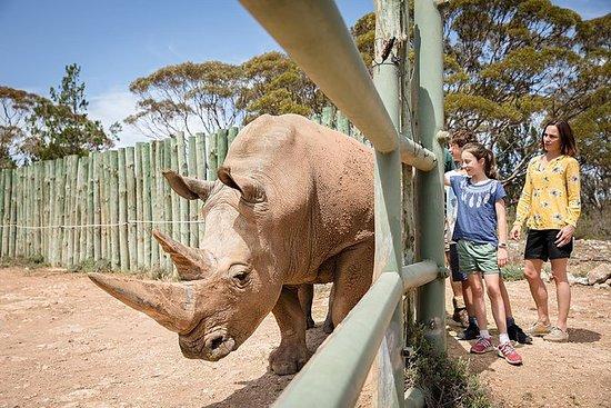 Rhino Interactive y un día en el Zoo...