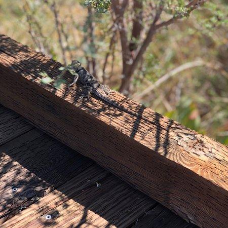 Amargosa Valley, NV: photo2.jpg