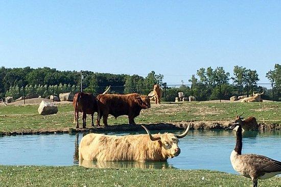 Safari In Ohio >> African Safari Wildlife Park Admission Provided By African Safari