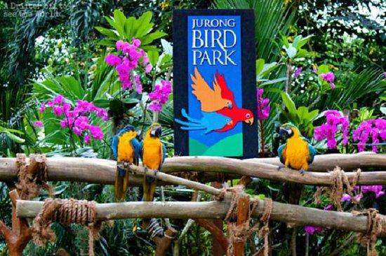 Biglietto d'ingresso al Jurong Bird