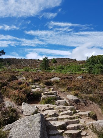Bennachie Visitor Centre: A Variety Of Walks - For All Levels
