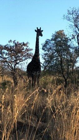 Mabula Private Game Reserve, Sydafrika: IMG20180911064232_large.jpg
