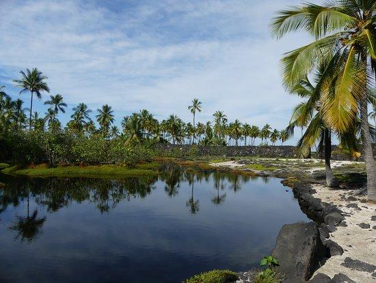 Honaunau, HI: Fishpond