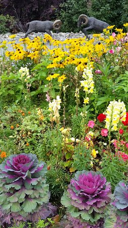 Trapper Creek, Alaska: colourful gardens