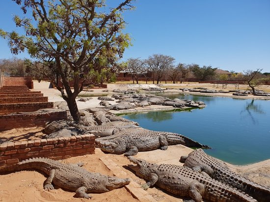 Thaba Kwena Crocodile Farm
