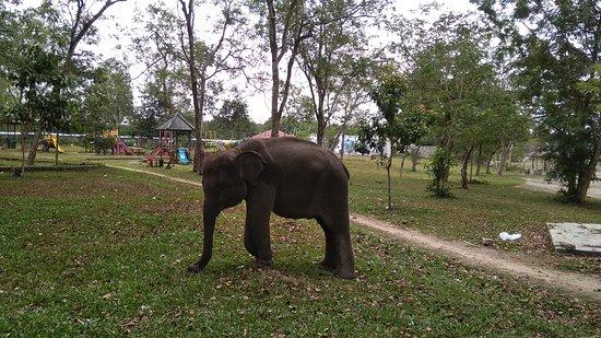 Lampung, Ινδονησία: Anak Gajah
