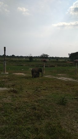 Lampung, Indonesia: Gajah di alam