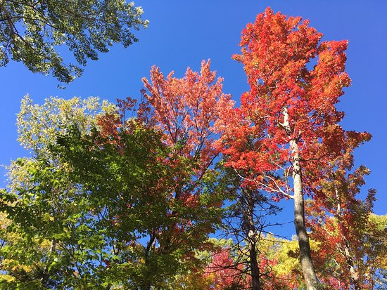 Backroad Discovery Tours: Foliage in Vermont