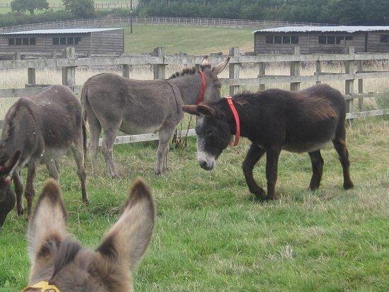 The Donkey Sanctuary: Donkeys in one of the paddocks