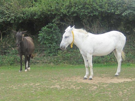 The Donkey Sanctuary: Donkeys of all shapes and sizes