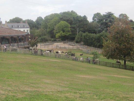The Donkey Sanctuary: Donkeys in a paddock