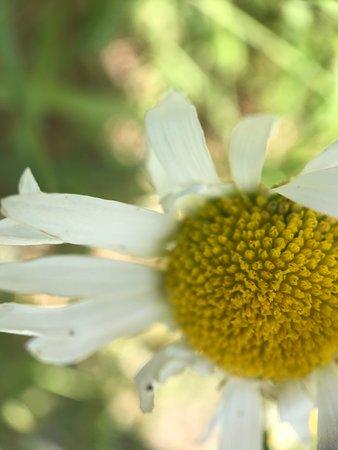 Toutle, WA: wildflowers