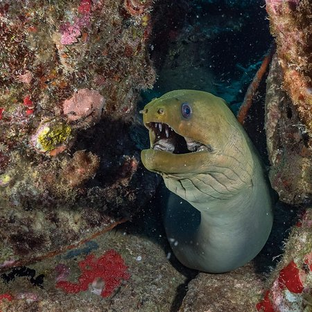 Scubafun: Punta Cana