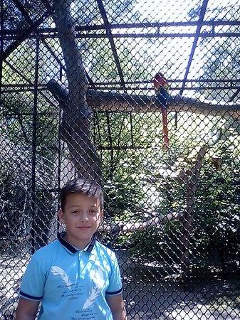 Novosibirsk Zoo: Птички-невелички.