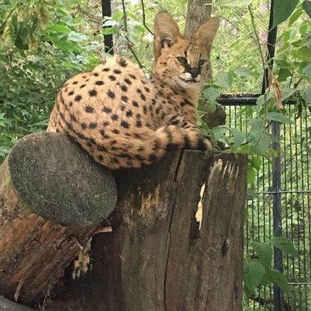 Novosibirsk Zoo: photo0.jpg