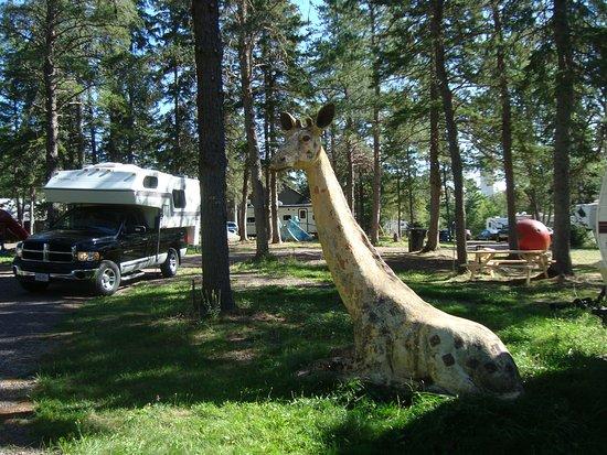 Animaland Camping Inc