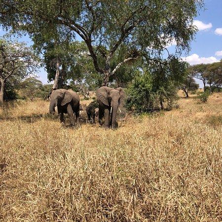 Национальный парк Тарангире, Танзания: photo0.jpg