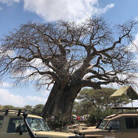 Национальный парк Тарангире, Танзания: photo1.jpg