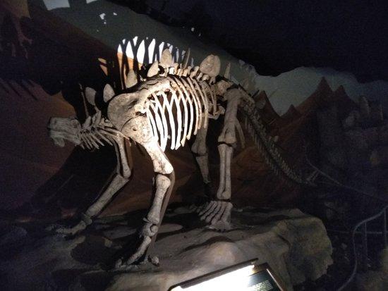 Фотография Dinosauria Park