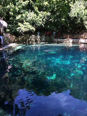 Xcaret Park: Fish