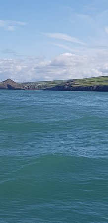 A Bay To Remember Wildlife Boat Trips Photo