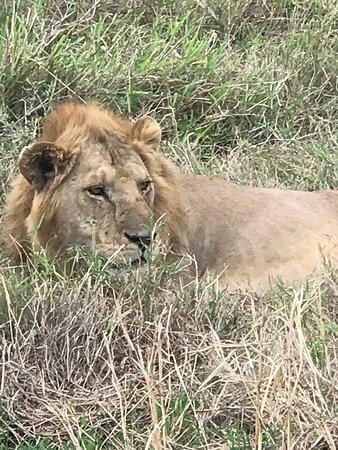 Micato Safaris (Nairobi) - 2019 All You Need to Know BEFORE