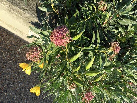 Уолл, Южная Дакота: Wildflower Garden