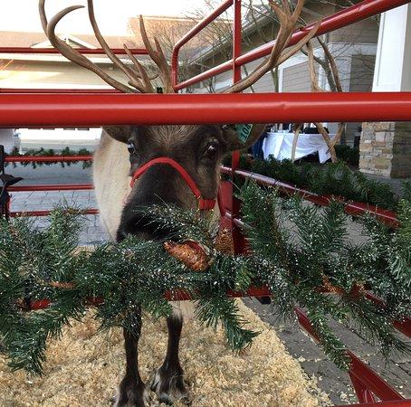 Santa's Reindeer Company