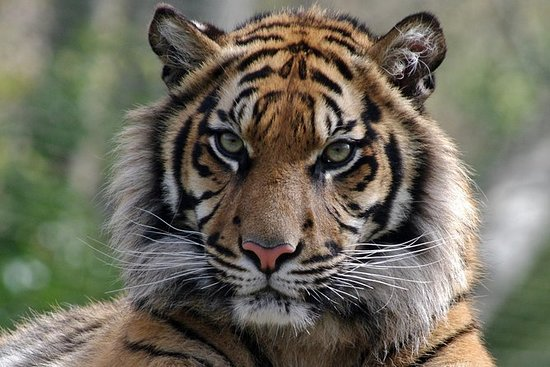 Lisbon Zoo ohne Anstehen