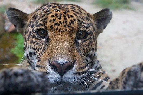 Billet d'entrée au Zoo de Sao Paulo
